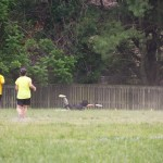 2012 Ultimate Tournament - 117